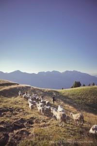 Photographies d'élevage en montagne sur la banque d'images en agriculture du Studio des 2 Prairies