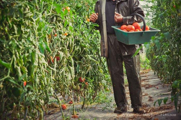 Photographies de légumes sur la photothèque du Studio des 2 Prairies. Banque d'images en agriculture.