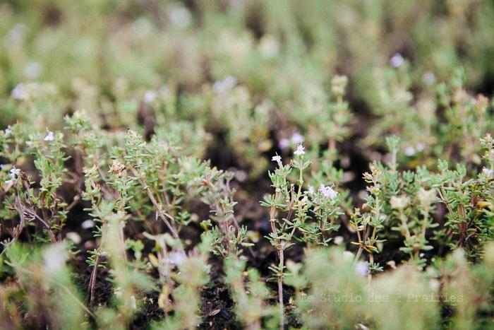 Formation photographique pour les entreprises et organismes agricoles
